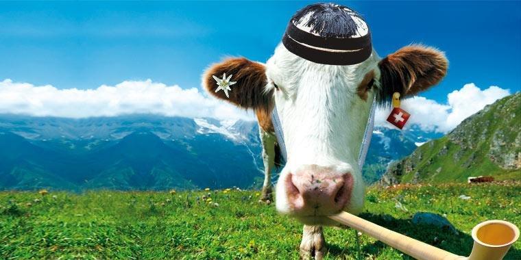 """Résultat de recherche d'images pour """"suisse vache"""""""